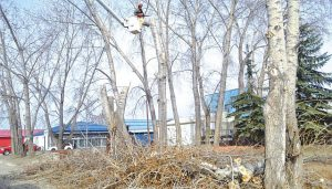 MacIntyre Park revitalization begins