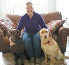Dogs trained to detect cancer
