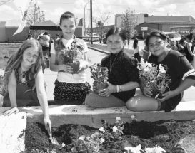PICs – Flower power takes root at MacIntyre Park