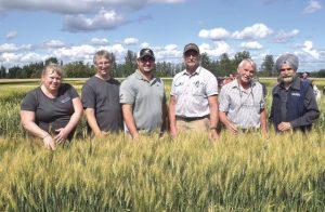 Farmers do the crop walk in High Prairie