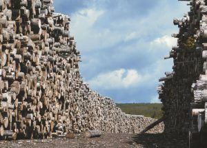 Forest products booming at the moment