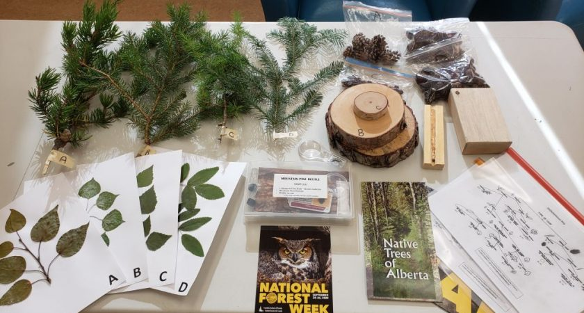 No 'big shindig' for the 100th Forest Week