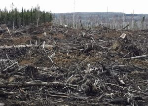 REAC calls for an end to clear-cut logging
