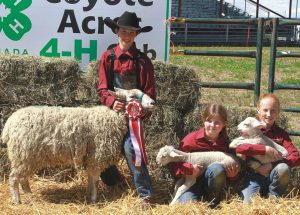 Cox, Krystal win top awards at 4H Show and Sale