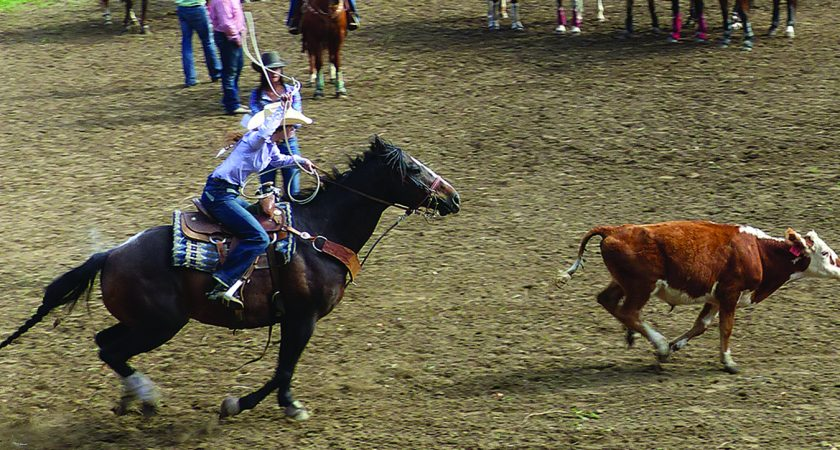 Rodeo action at SP Park